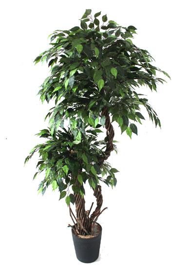 Groene Kunstficus Dubbele Kruin 165cm