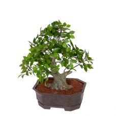 Kleine Kunst-bonsai 40cm