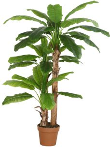 Kunstbananenboom Musa 175cm