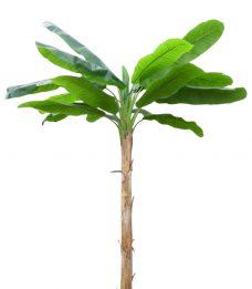 Kunstbananenboom XL 300cm