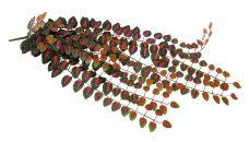 Kunst Peperonia Bunsh 90cm