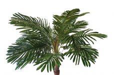 Palmboomtop 20 Bladeren