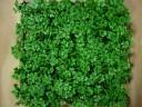 Vetplantelement sedum