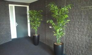 foto's kunstplanten