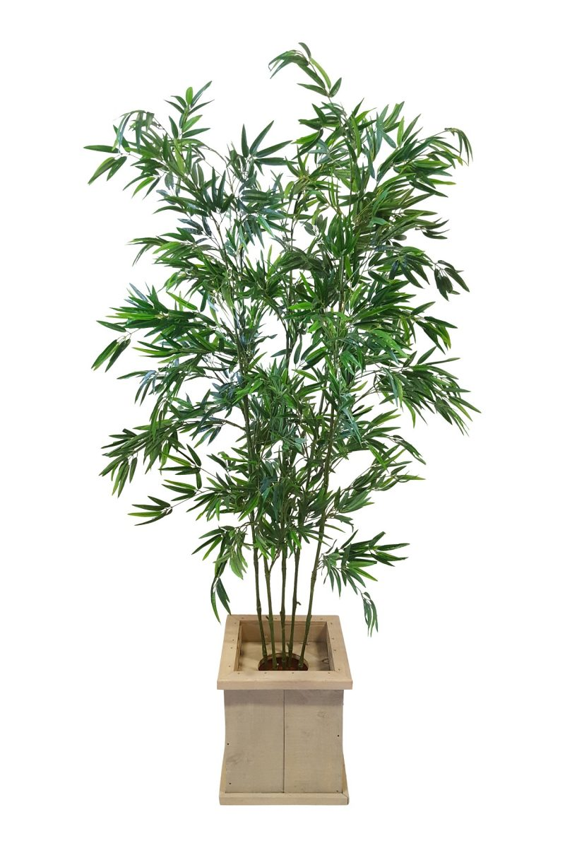 Grote Verhuur Bamboeplant in Lage Pot H200cm