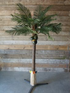 Grote verhuurpalmen 375cm