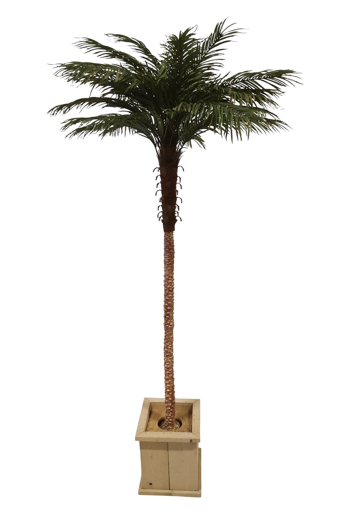 Extra Hoge Verhuur Palmboom 265cm