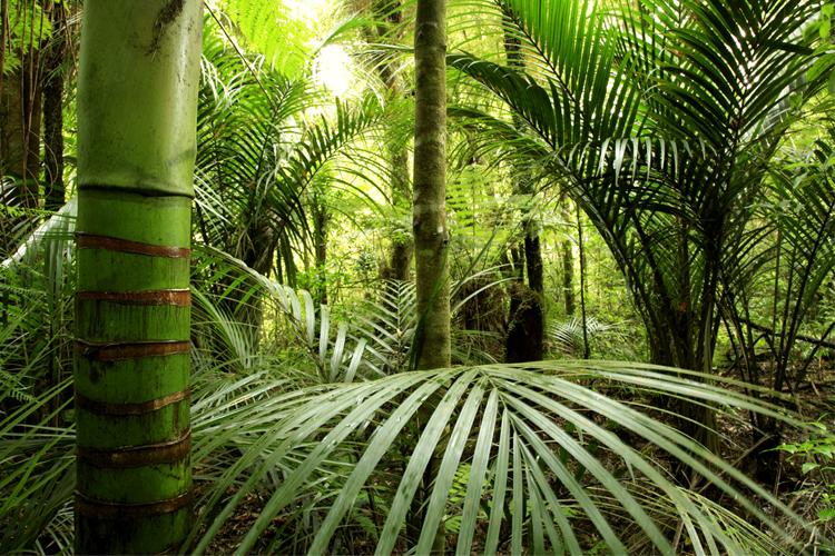 Junglewand