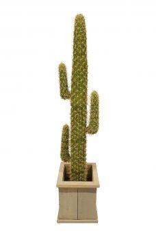 Mexico Cactus Huren 190cm