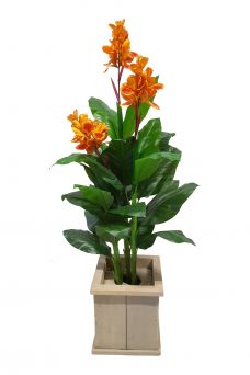 Oranje Verhuur Bloemplant in Bak 180cm