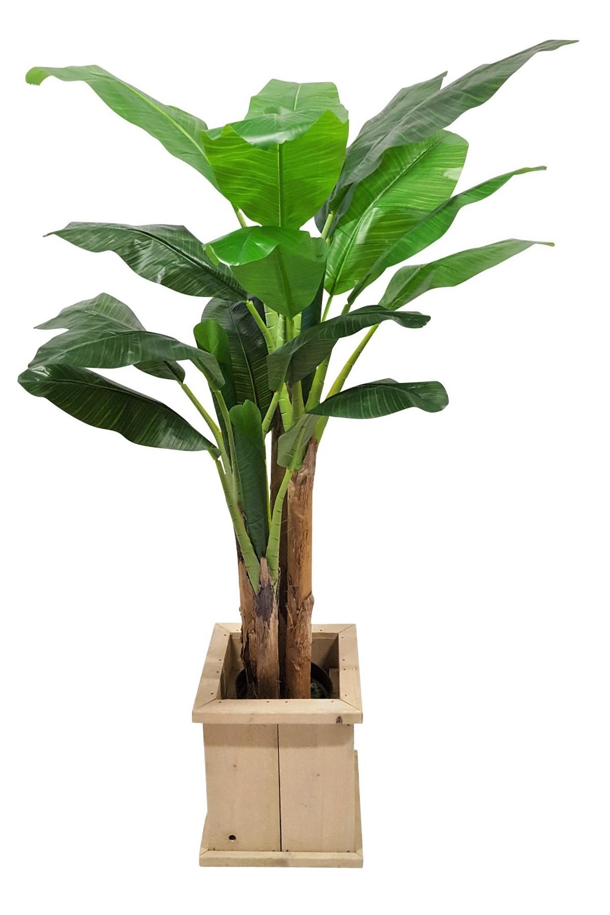Verhuur Kunst Bananenboom 200cm