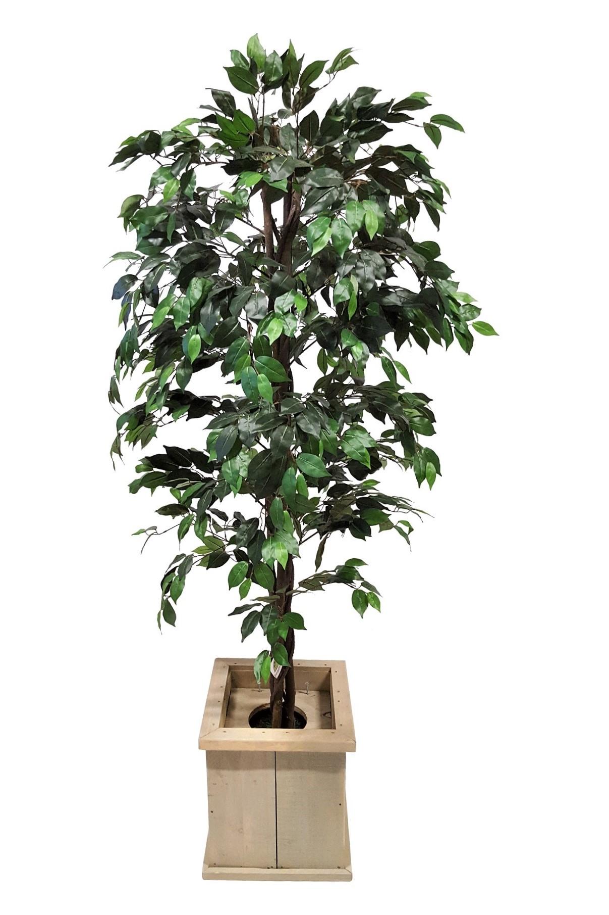 Verhuur Kunstficus Groen in Lage Pot 200cm