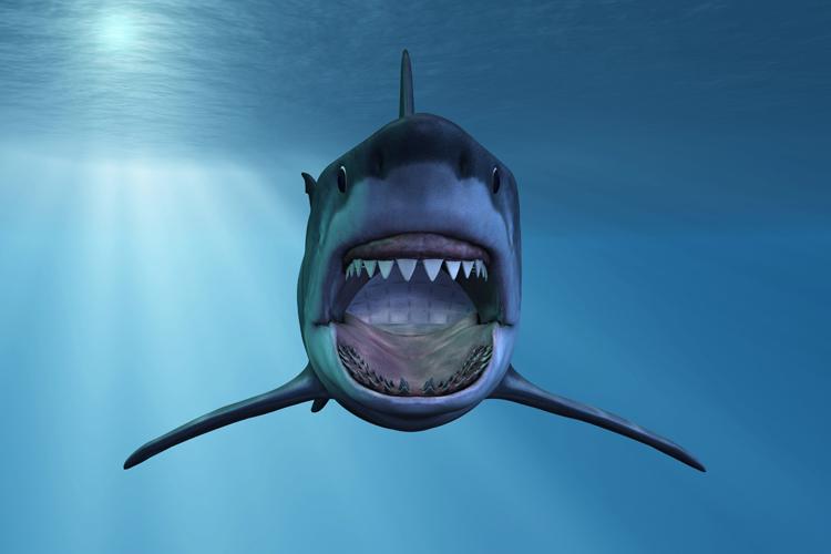 haai wandafbeelding