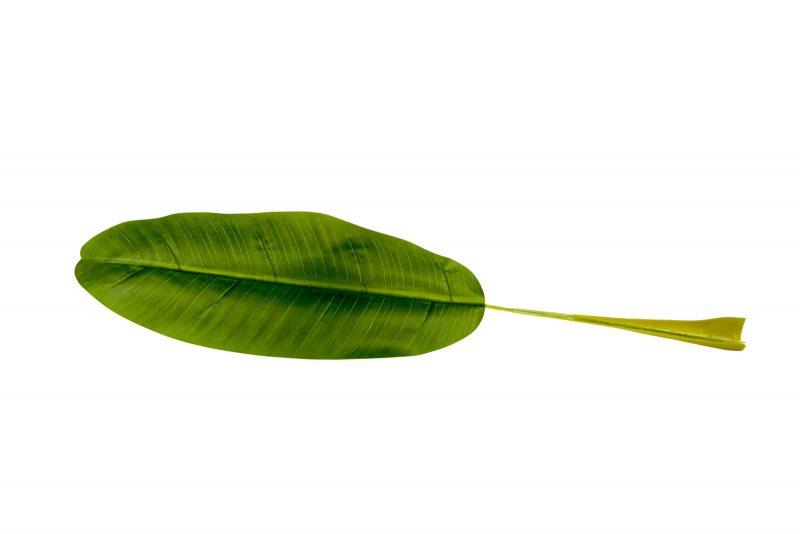 Bananenbladeren 60cm