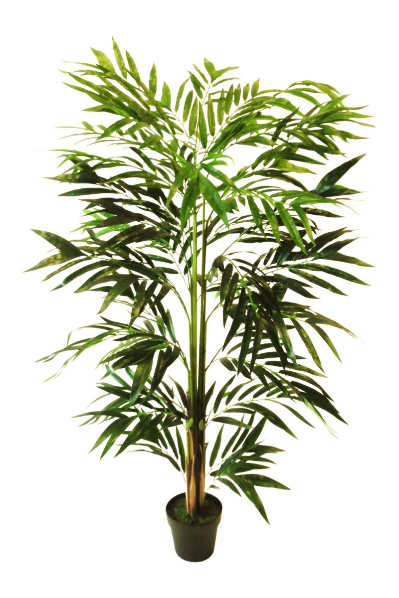 Fishtail Palmboom 150cm