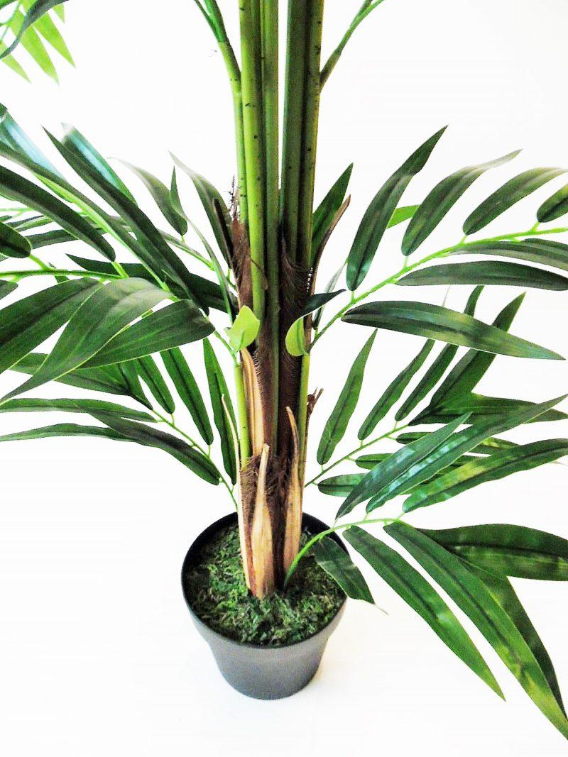 Fishtail Palmboom 185cm