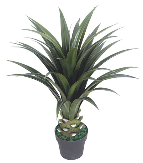 Yucca Naxos 80cm