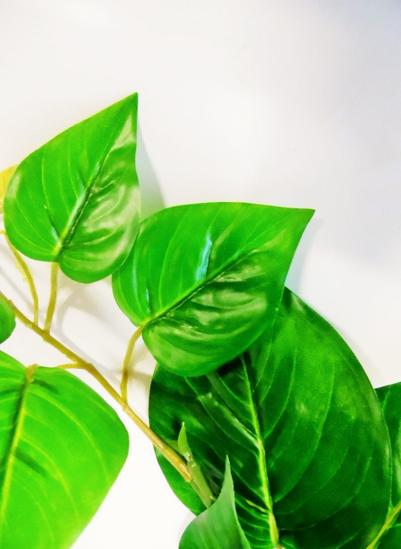 Krulliaan met Groene Bladeren 175cm