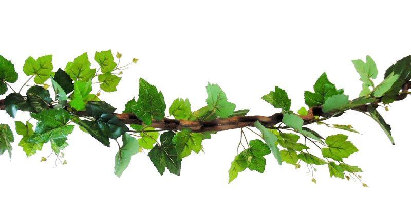 Kronkel Liaan met Druivenblad 115cm