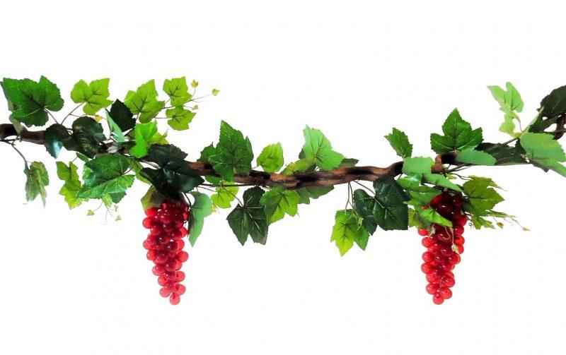 Kronkel Liaan met Rode Druiven 115cm