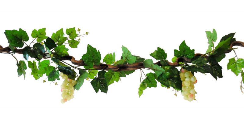 kronkel liaan met witte druiven 115cm