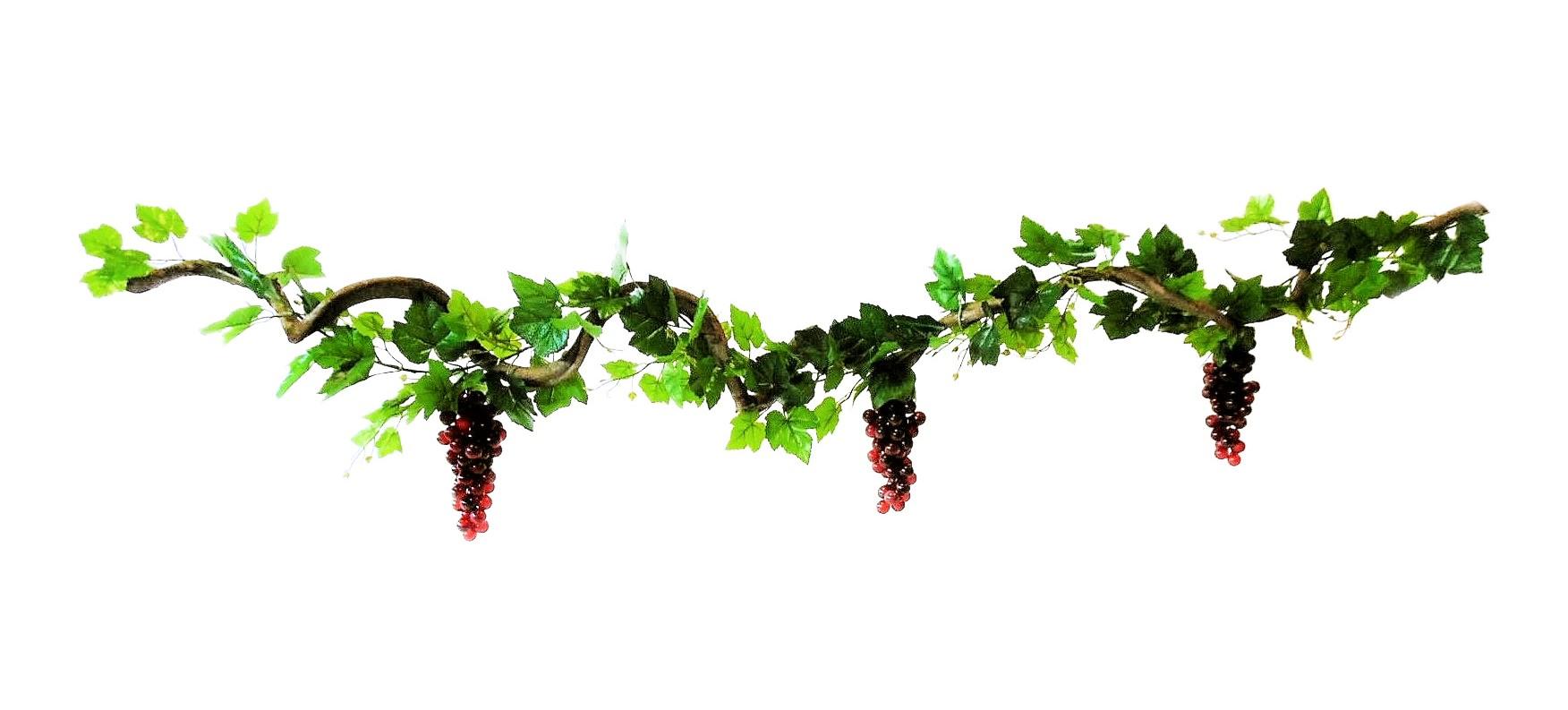 Krulliaan Rode Druiven 175cm