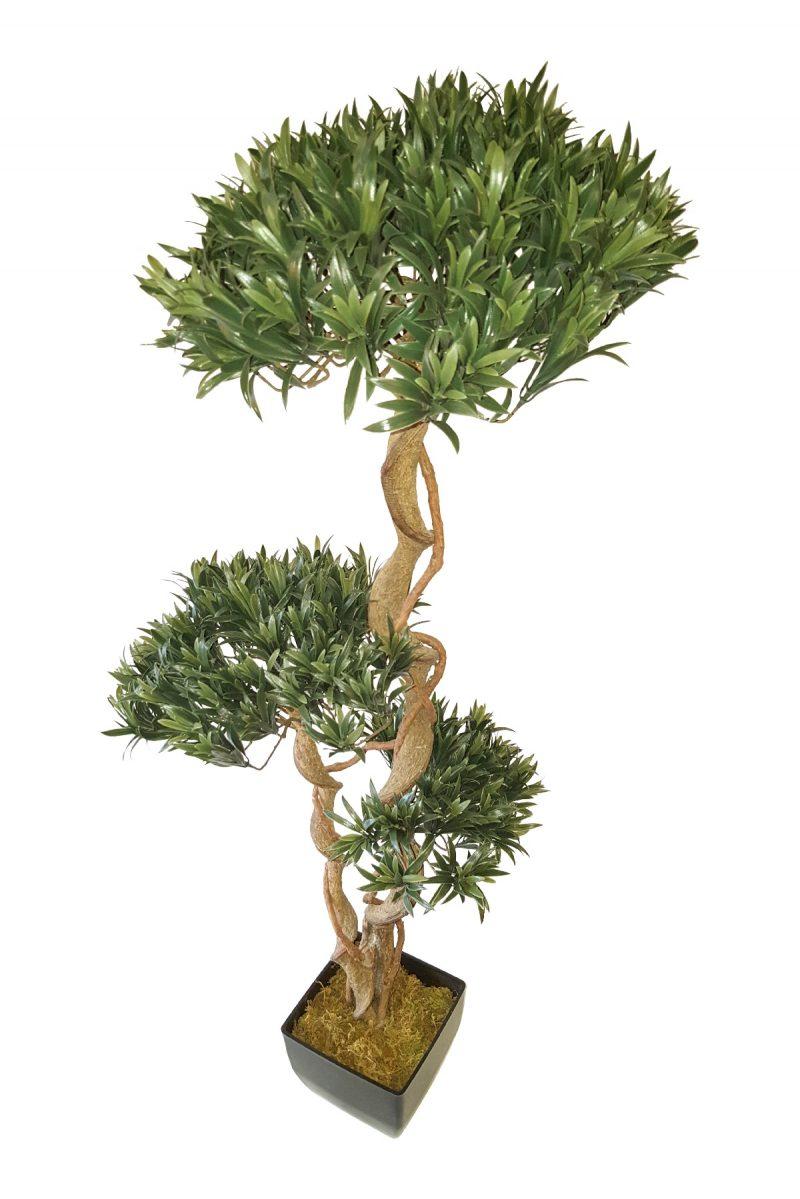 Podo Bonsai 120cm