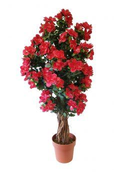 Stamheester met fuchsia-rode Bloemen 115cm