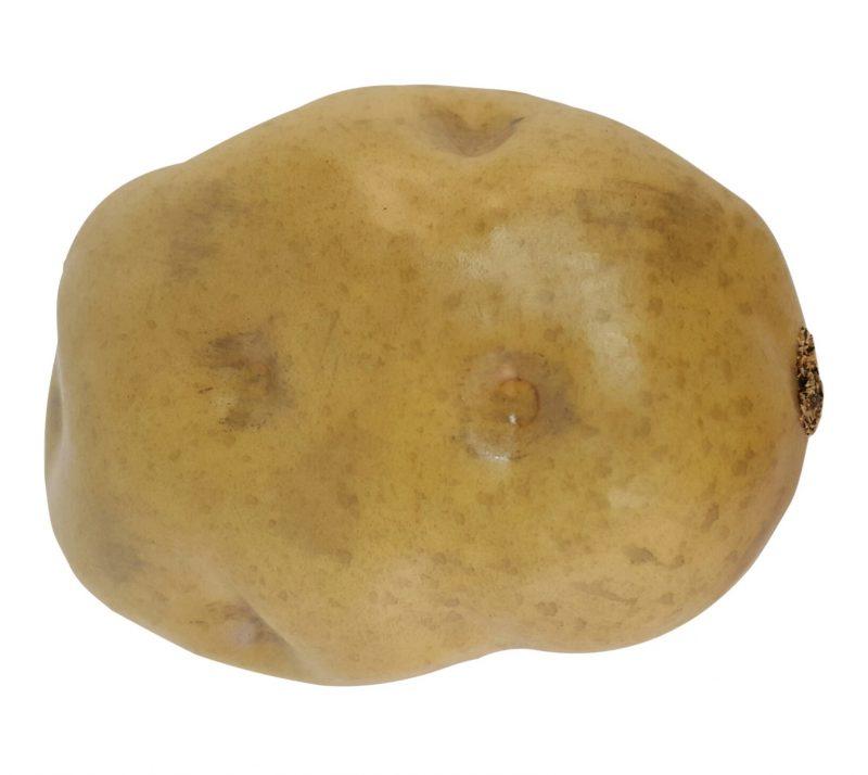 Kunst Aardappel 10cm