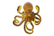 Namaak Octopus 25cm
