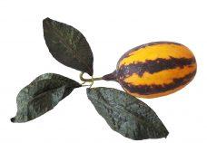 Oranje Bruine Namaak Kalebas 15cm.