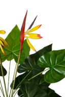 Paradijsvogel Plant 70cm