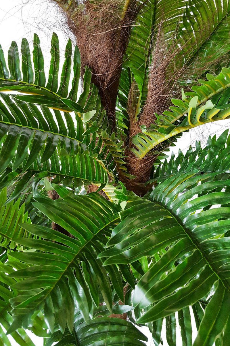 Varenpalm Fiji 185cm