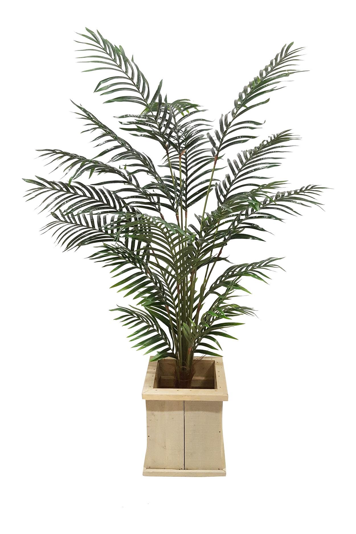Areca Verhuur Palm in Lage Pot 200cm