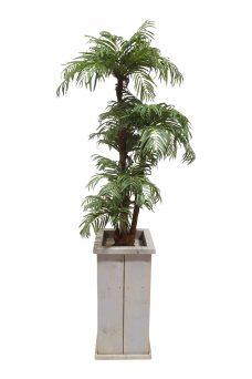 Verhuur Kokospalm in Hoge Pot 230cm