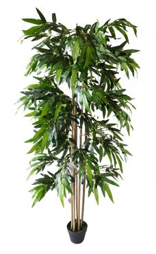 Breedblad Budget Bamboe 175cm