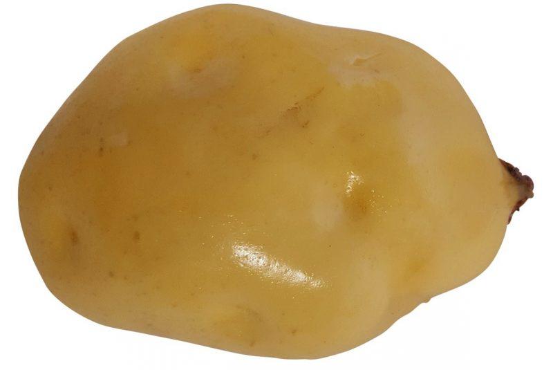 Namaak Aardappel 10cm