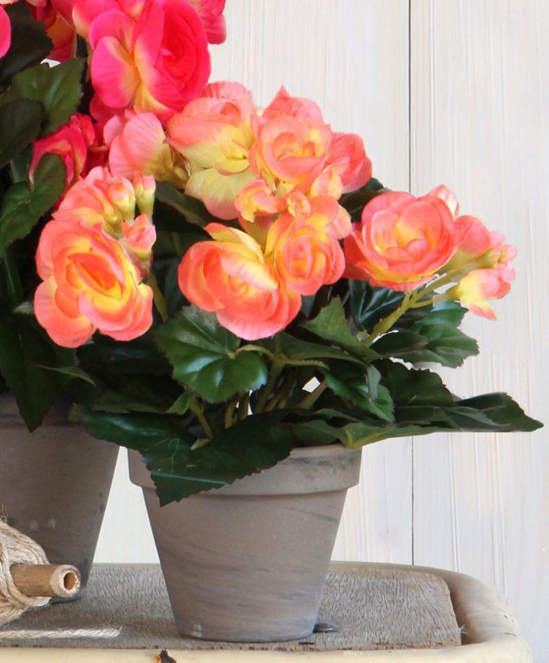 Kunst Begonia rose-geel 25cm