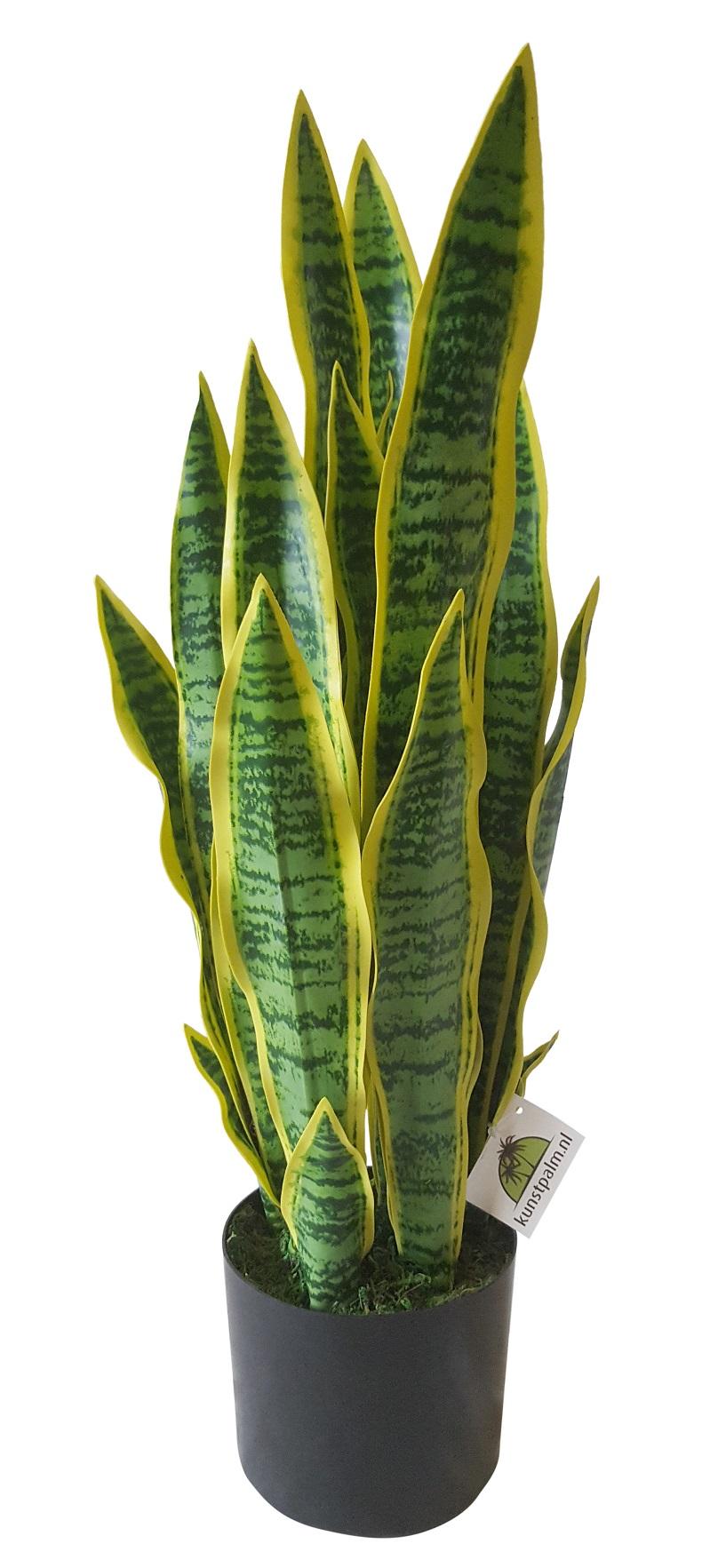Kunst Sanseveria 68cm