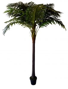 Grote Kunst Kokospalm Havana 260cm
