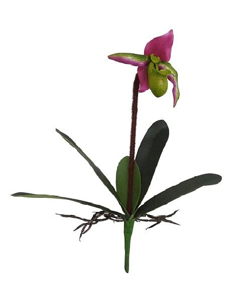 Kelk Orchidee Rose Groen 40cm