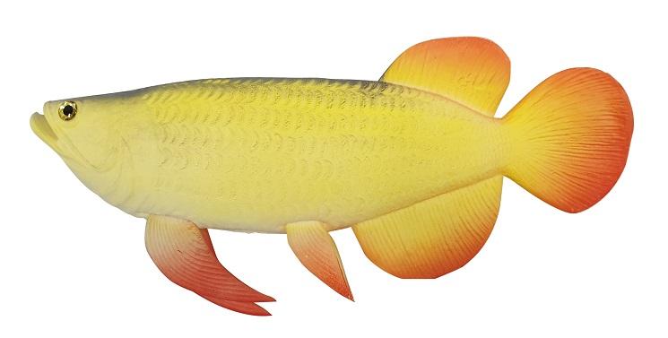 Exotische Kunst Siervis Oranje Geel 36cm
