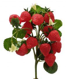Nep Aardbeien Plantje