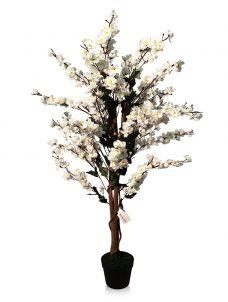 Wit Kersen Bloesemboompje 120cm