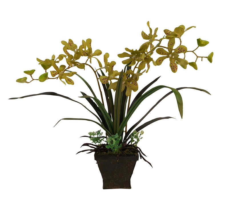 Gele Nep Orchideeplant in Pot 35cm