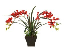 Rode Nep Orchideeplant in Pot 35cm