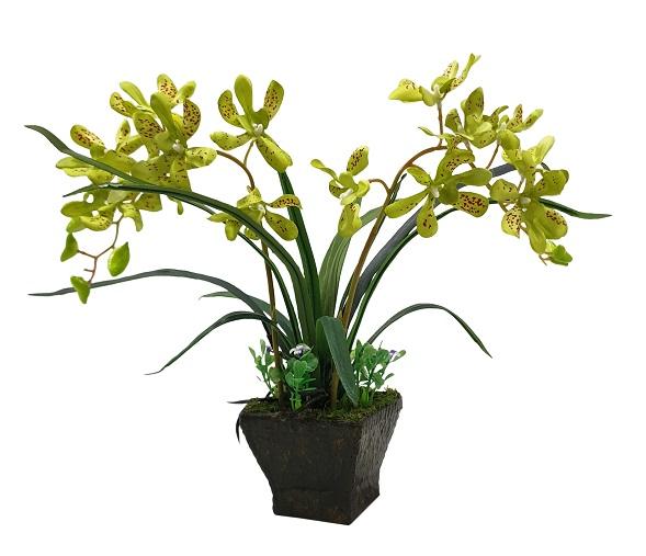 Groene Nep Orchidee in Pot