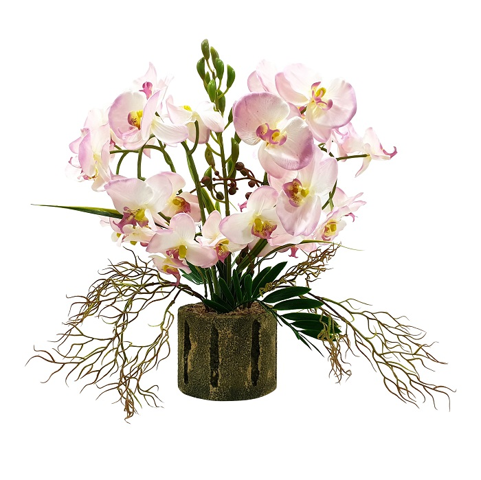 Grote Kunst Orchideeplant Rose 55cm