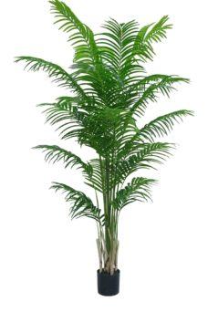 Nep Areca Palmboom Tobago