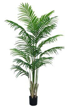 Nep Areca Palmboom Trinidad 175cm